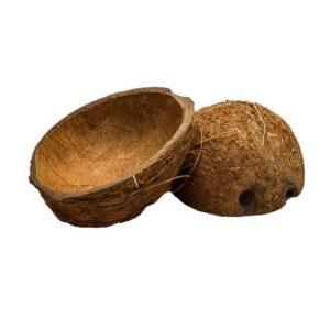 coconutshells instrumento